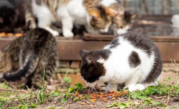 Gatti senza casa su una strada cittadina. la gente nutre animali abbandonati. Foto Premium