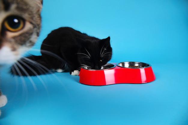 Gatti svegli che mangiano da una ciotola rossa Foto Premium