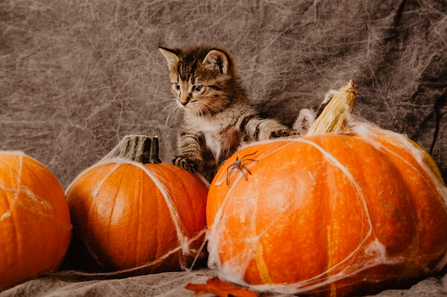 Gattino a decorazioni di halloween Foto Premium