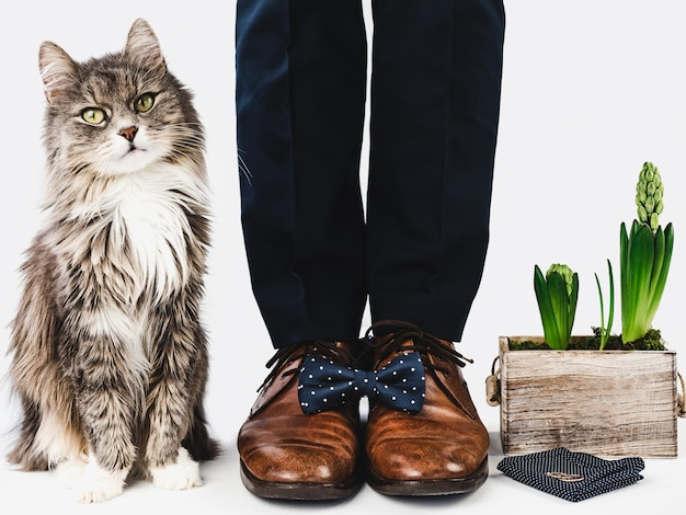 Gattino carino, responsabile dell'ufficio e scarpe eleganti Foto Premium