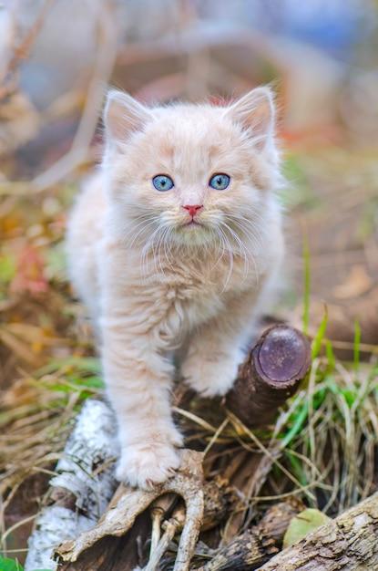 Gattino in giardino Foto Premium
