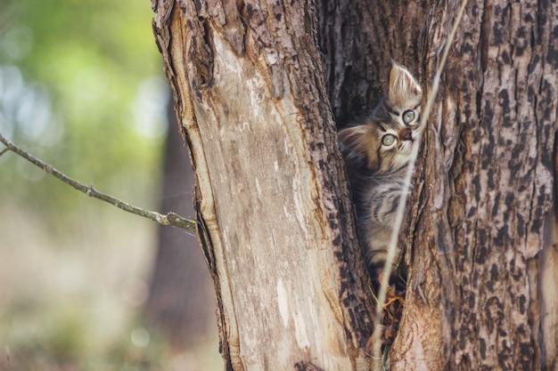 Gattino lanuginoso da solo nella cavità di un albero in estate Foto Premium