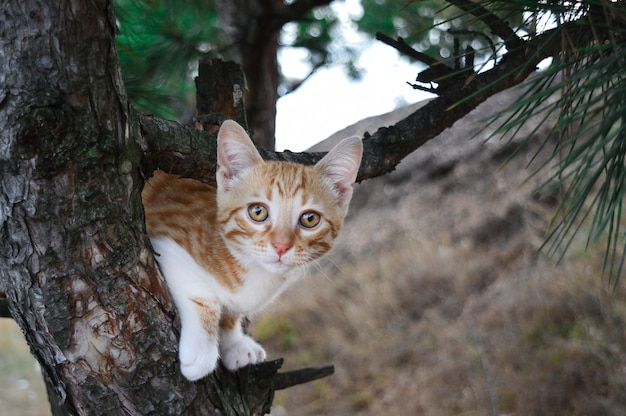 Gattino rosso su un albero. per carte, poster, vlakat, design. Foto Premium