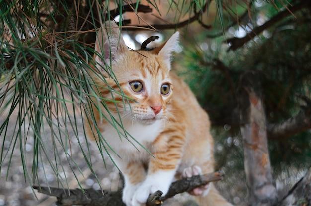 Gattino rosso su un albero. Foto Premium