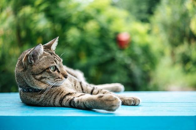 Gatto a strisce dormire su un pavimento di cemento blu e guardando a sinistra Foto Gratuite