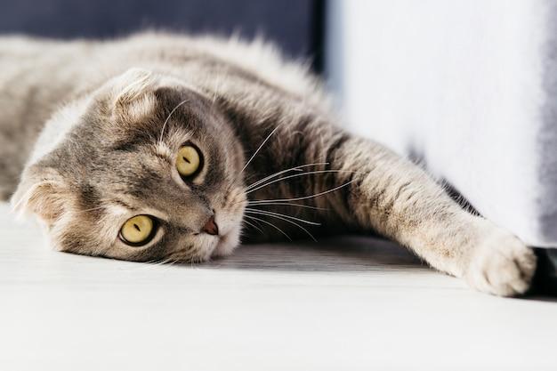 Gatto appoggiato sul pavimento Foto Gratuite