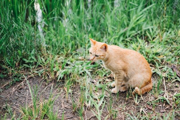 Gatto arancione si siede e guardando qualcosa Foto Gratuite