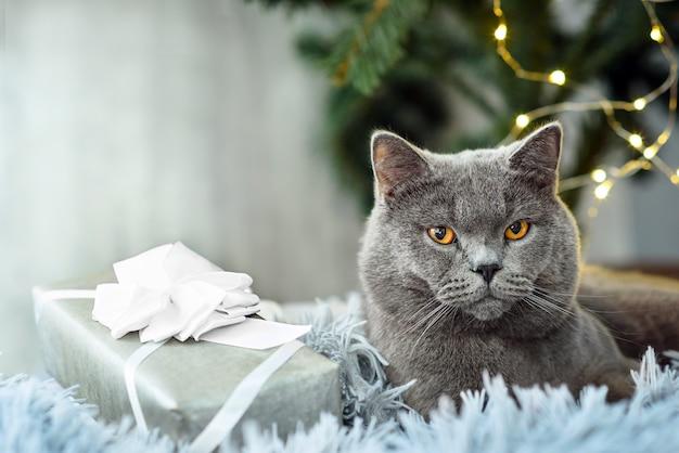 Gatto britannico grigio con regali di natale sul tema vacanze Foto Premium
