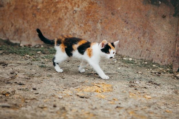 Gatto colorato che cammina in una fattoria Foto Premium