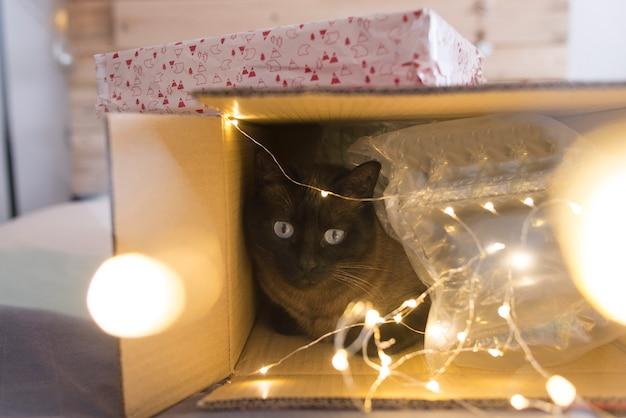 Gatto dentro un contenitore di regalo di natale con le luci Foto Premium
