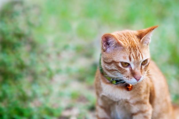 Gatto domestico marrone adorabile in giardino verde Foto Gratuite