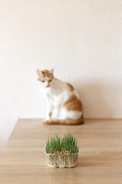 Gatto ed erba che puoi mangiare. Foto Premium