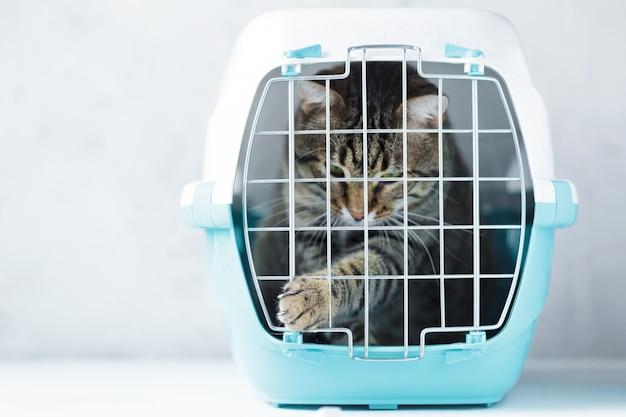 Gatto grigio in una gabbia per il trasporto Foto Premium