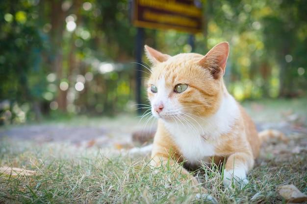 Gatto marrone sveglio su erba verde con priorità bassa vaga del bokeh Foto Premium
