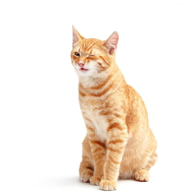 Gatto rosso sveglio su una superficie bianca Foto Premium
