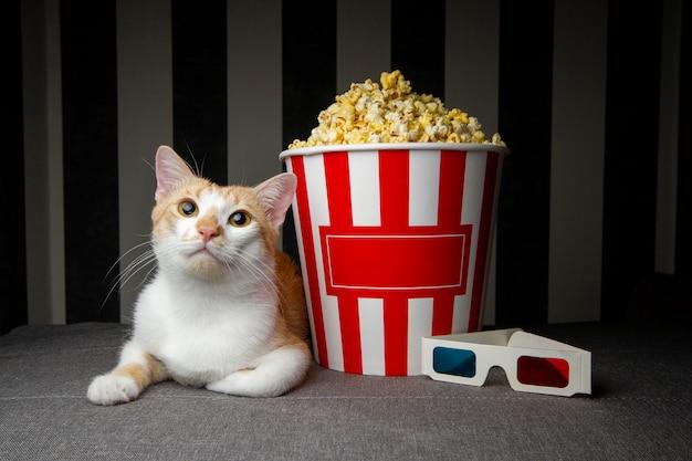 Gatto sdraiato sul divano con popcorn e guardare la televisione, si riposa la sera nella stanza, copia spazio per il testo Foto Premium