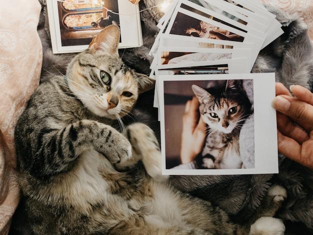 Gatto soriano sdraiato nel letto e diverse foto retrò Foto Premium