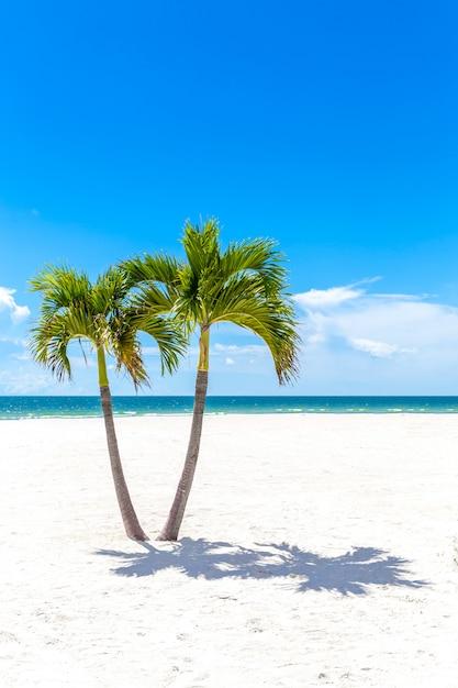 Gemella le palme in spiaggia della florida, usa Foto Premium