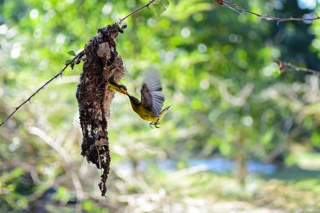 Generi l'uccello che alimenta i suoi giovani nel nido con bello fondo della natura Foto Premium