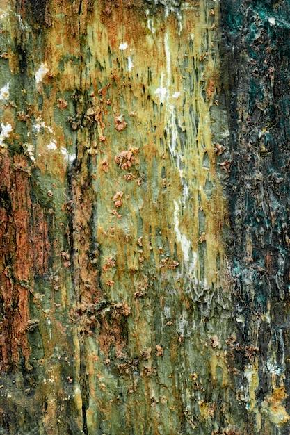 Geologia di struttura variopinta della roccia verde e rossa Foto Premium
