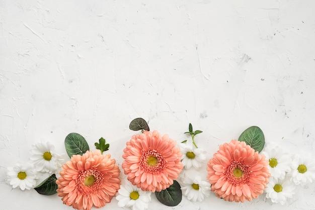Gerbera fiori con margherite e copia spazio Foto Gratuite