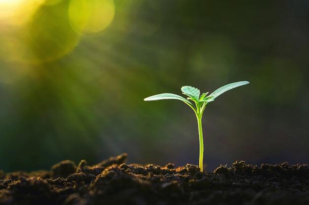 Germoglio verde che cresce in giardino con il sole Foto Premium