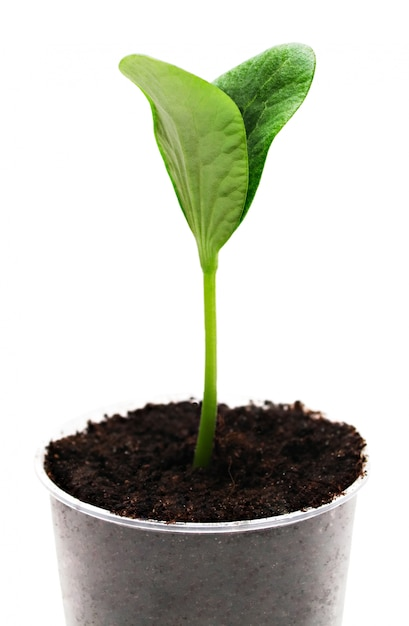Germoglio verde Foto Premium