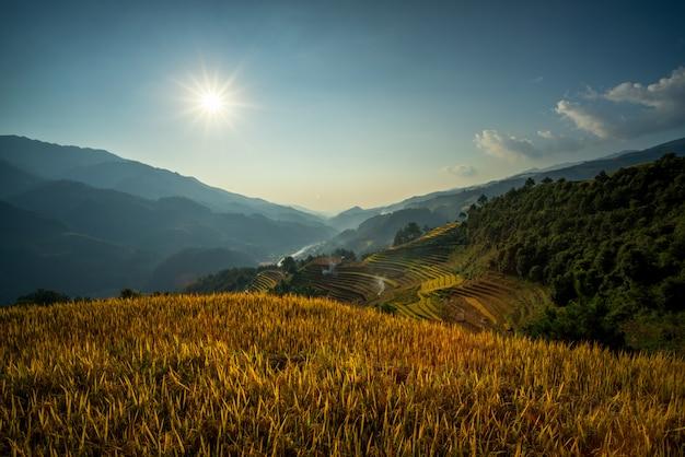 Giacimento verde del riso a mucangchai vietnam Foto Premium