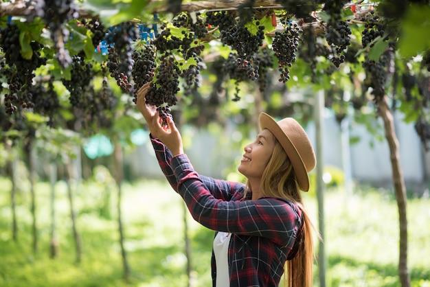 Giardiniere felice delle giovani donne che tiene i rami dell'uva blu matura Foto Gratuite