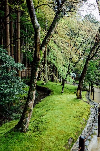 Giardino del parco degli alberi in giappone Foto Gratuite