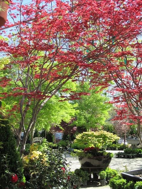 Giardino di alberi di autunno scaricare foto gratis - Foto di alberi da giardino ...