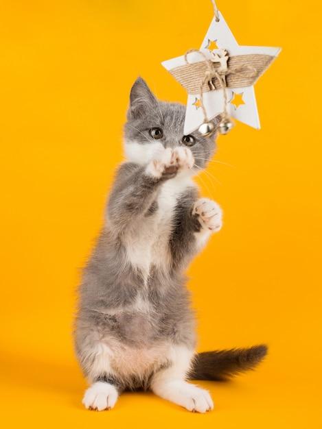 Gioco carino gattino grigio divertente e divertente con un giocattolo di natale su un giallo. Foto Premium