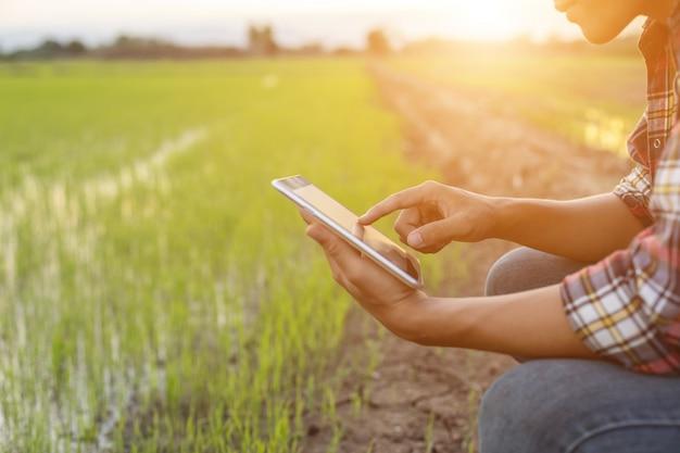 Giovane agricoltore asiatico che per mezzo della compressa al giacimento verde del riso Foto Premium