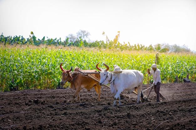 Giovane agricoltore indiano che ara al campo Foto Premium