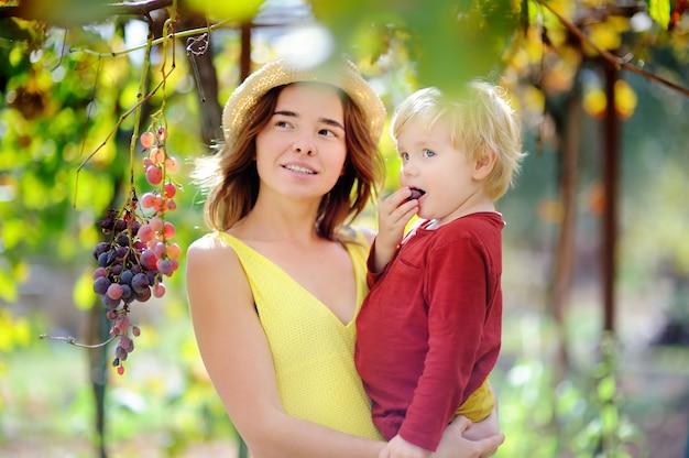 Giovane bella ragazza e piccolo bambino che selezionano uva piena nel giorno soleggiato in italia. felice femmina agricoltore e il suo piccolo aiutante lavorando nel frutteto Foto Premium