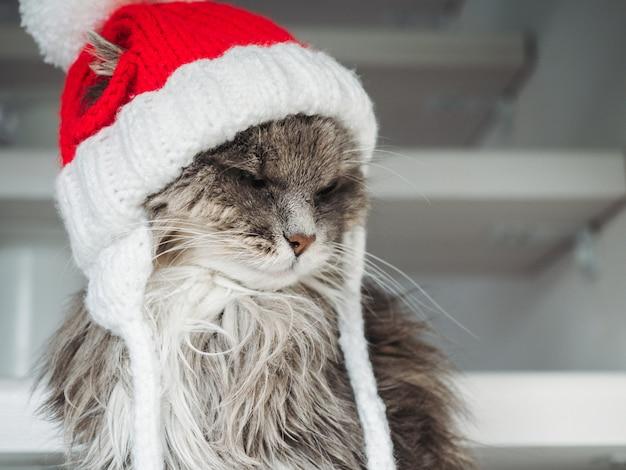 Giovane gattino in un cappello di lana rossa Foto Premium