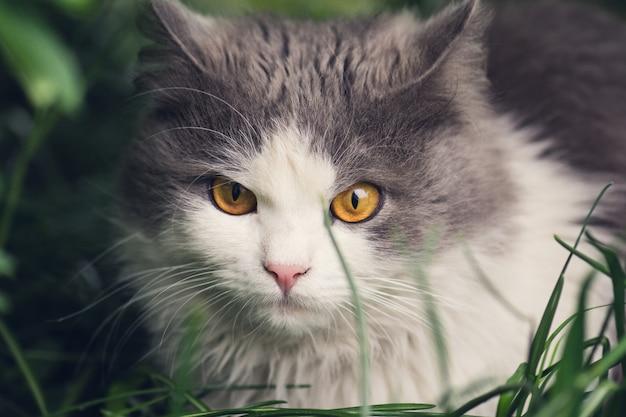 Giovane gatto nell'erba Foto Premium