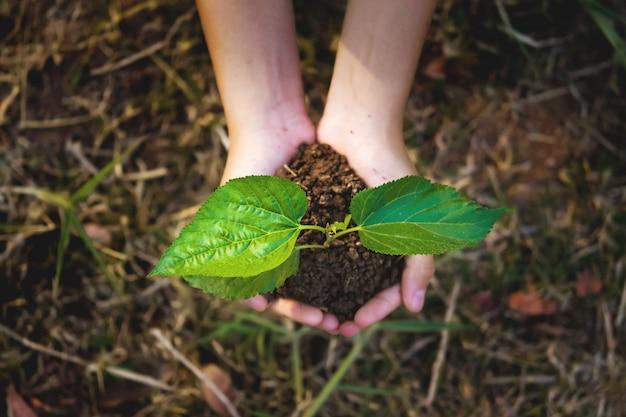 Giovane pianta che cresce a disposizione con priorità bassa dell'erba. eco concept earth day Foto Premium