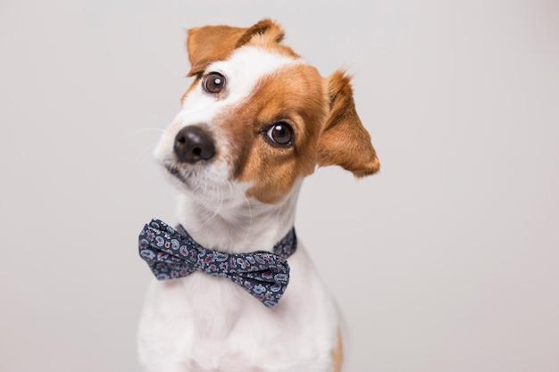 Giovane piccolo cane bianco sveglio che indossa una cravatta a farfalla moderna. Foto Premium