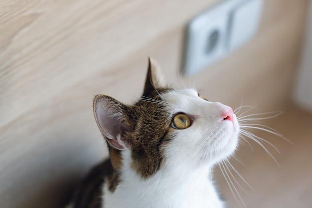 Giovane soriano bicolore domestico sveglio e gatto bianco che si siedono sullo scaffale, guardanti su, vista laterale. messa a fuoco selettiva, copia spazio Foto Premium