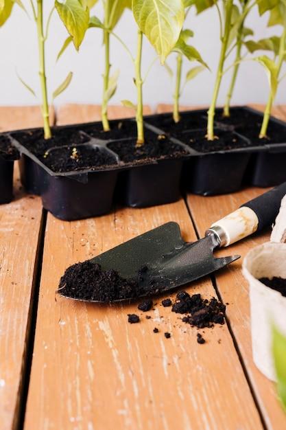 Giovani piante di alto angolo sul tavolo Foto Gratuite