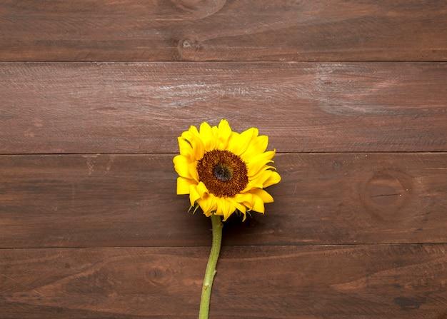 Girasole luminoso su fondo in legno Foto Gratuite