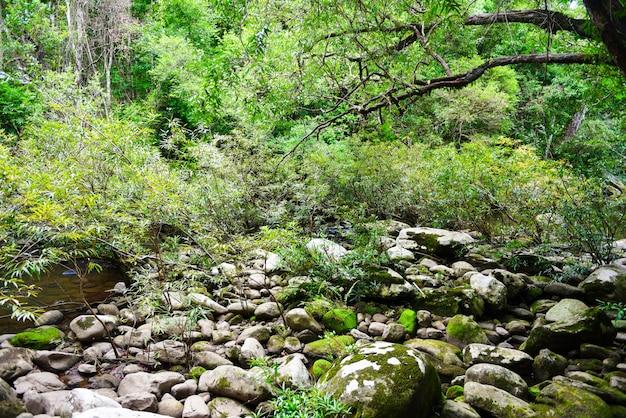 Giungla della foresta pluviale con roccia e mos verde nella foresta tropicale selvaggia Foto Premium