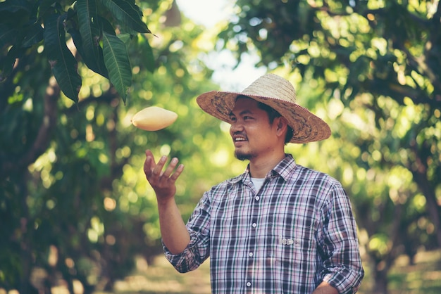 Gli agricoltori stanno controllando la qualità del mango, il concetto di giovani intelligenti della famiglia Foto Premium
