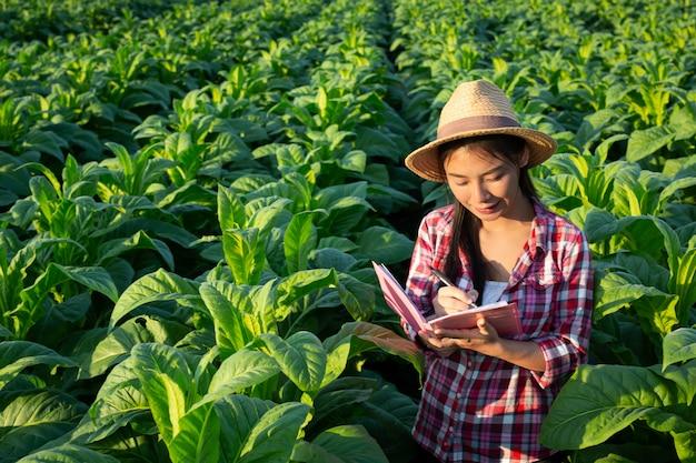 Gli agricoltori tengono il taccuino controllano i campi di tabacco moderni. Foto Gratuite