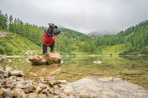 Gli escursionisti nelle alpi austriache camminano su sentieri escursionistici di montagna nei boschi intorno ai laghi con cane nero Foto Premium