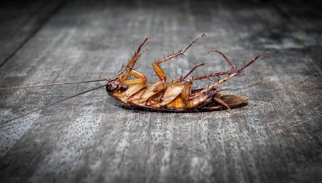 Gli scarafaggi giacciono morti sul pavimento di legno Foto Premium