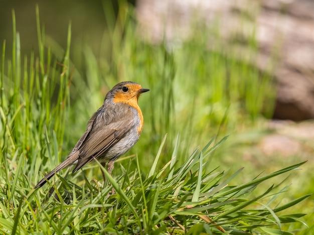 Gli uccellini con i loro magnifici colori in primavera Foto Premium