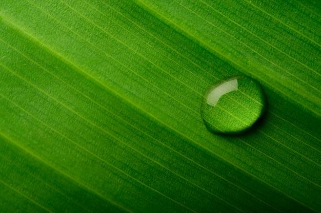 Gocce d'acqua che cade sulle foglie di banana Foto Gratuite