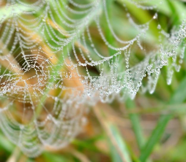 Gocce d'acqua su una ragnatela in erba Foto Premium